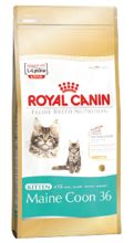 Royal Canin Kitten Maine Coon 36 dwupak 2x10kg